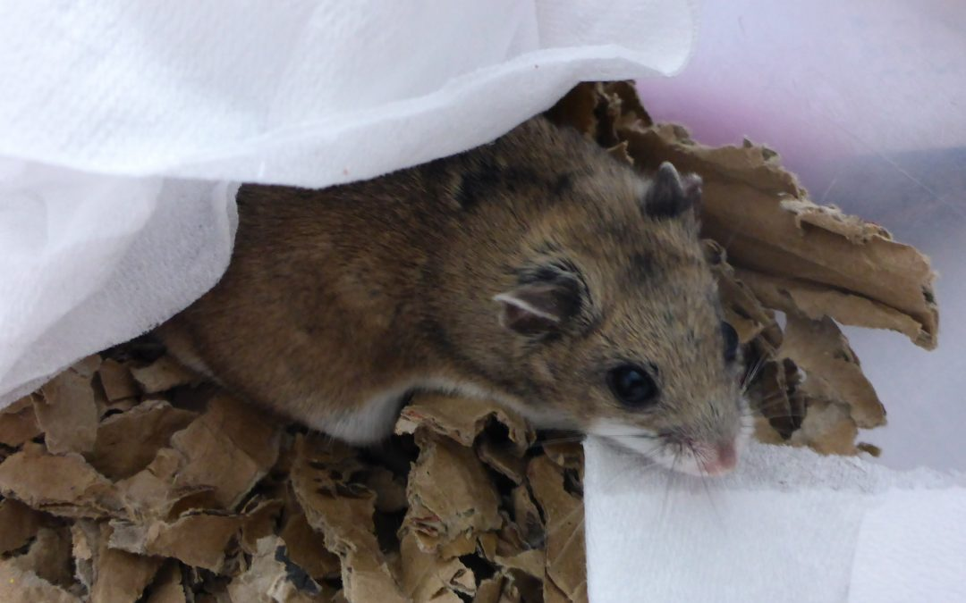 Hamster enrichment through substrate