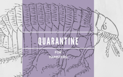 How to Quarantine Hamsters