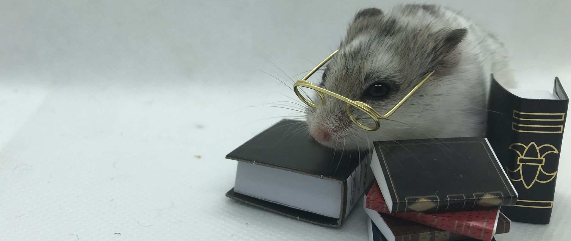 Hamster resting on books while wearing glasses