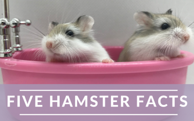 Five Facts about Hamsters