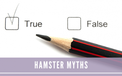 Hamster Myths: True or False?