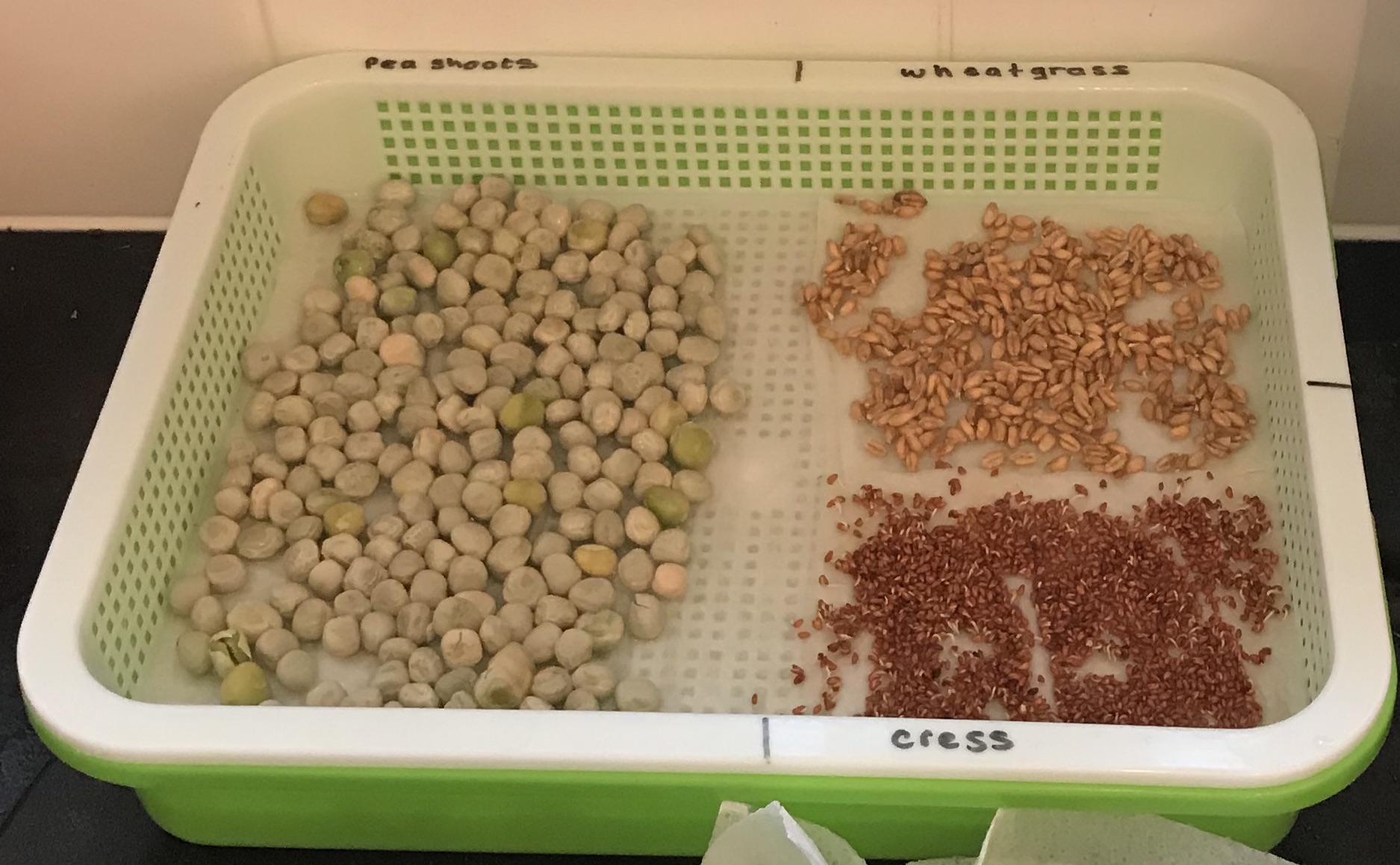 seeds ready to sprout