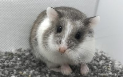 Five More Facts About Hamsters